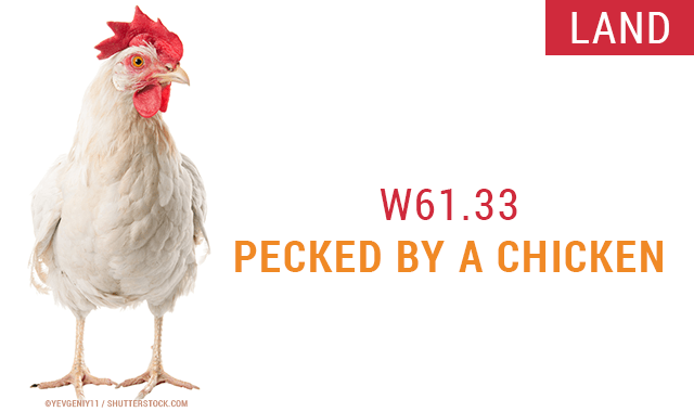 Pecked By A Chicken - 20 Amusing and Bizarre New ICD-10 Codes