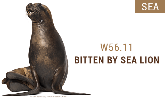 ICD-10 codes - bitten by a sea lion