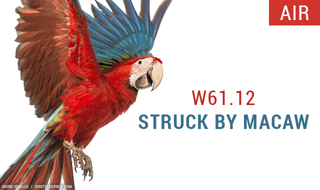 Struck by a macaw new icd 10 code