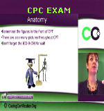 cpc exam - anatomy - Medical Terminology Basics